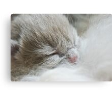 Kittens first drink Canvas Print