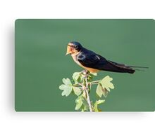 Tweet! Canvas Print