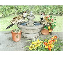 Flickers at the Fountain on a Hot Summer Day Photographic Print