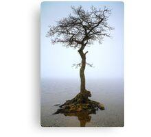 Milarrochy Tree (3) Canvas Print