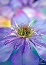 Clematis Rainbow Flower Photography by William Martin