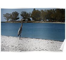 Bird on the Beach - Beer Can Island - Longboat Key Poster