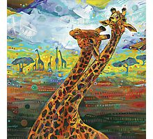 Giraffes Photographic Print