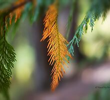 Orange Pine Branch by Yannik Hay