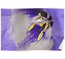 Flower 30 Poster