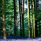 Bluebell woods by Paul Richards