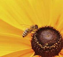 Busy Bee by Shubd