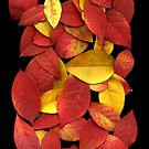 Leaves on a Scanner by Stephen D. Miller