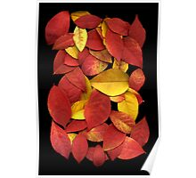 Leaves on a Scanner Poster