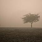 Tree Stands Alone in Fog by Jennifer P. Zduniak