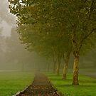 Fall in it's early stages by Jennifer P. Zduniak
