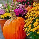 Fall Pumpkins and MUMS by Jennifer P. Zduniak