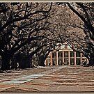 Oak Alley: Sepia by Chet  King
