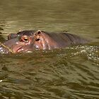Happy Hippo by Bine