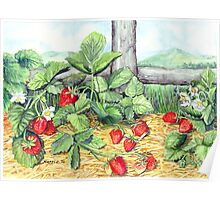 Strawberries and Rail Fence Poster