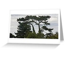 Trees @ Manor Barn - Bexhill Greeting Card