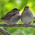 Fledglings by Bine