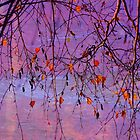 Autumn by Kerry  Hill