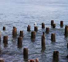 Seagull of the East River by johnproestakes