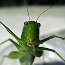 Oscar, the grasshopper trapped in a glass by Bine