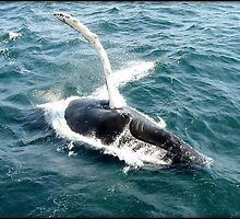 Whale Watching from Hyannis Barnstable, Cape Cod, MA by Bine