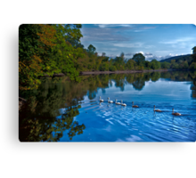 Swanny River Canvas Print
