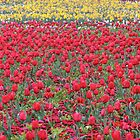 More than red - Floriade 2011 by Kelly Robinson