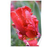 Parrot Tulip - Floriade 2011 Poster