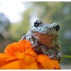 Grey Tree Frog Photo Print by LizardSpirit