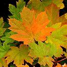 Devil's Club In Autumn by Gina Ruttle  (Whalegeek)