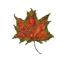 Watercolor Maple Autumn Leaf Photographic Print