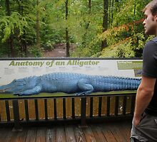 Learning about Gators by lroof