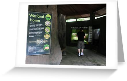 Learning about Wetlands by lroof