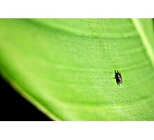 Only if I could be a fly on a leaf Photographic Print