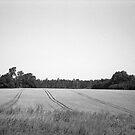 Lauki, Tukuma novadā | Field, Tukuma district by Roberts Birze