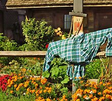 A Harvest Scarecrow by lorilee