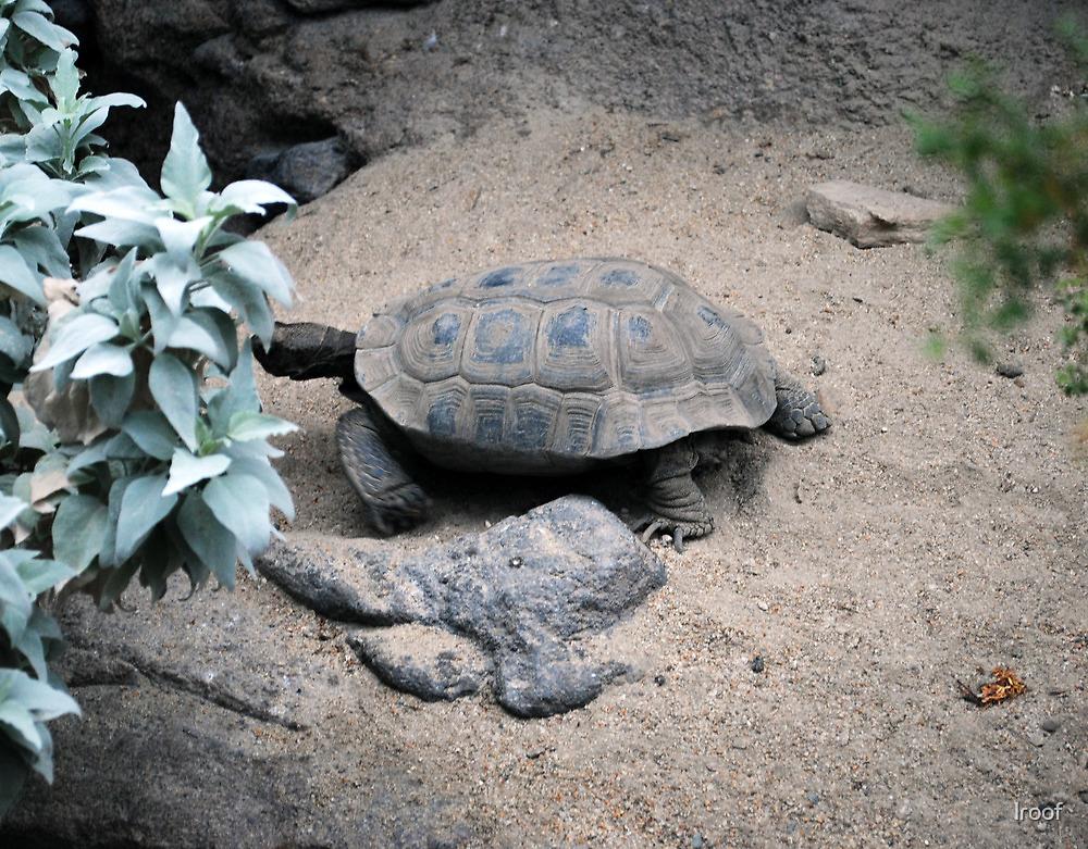 Desert Turtle by lroof