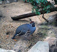 Desert Bird by lroof
