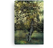 In the King's Orchard Canvas Print
