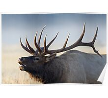 Elk in Fog 4 Poster
