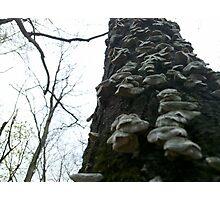 Fungus Stairwell Photographic Print