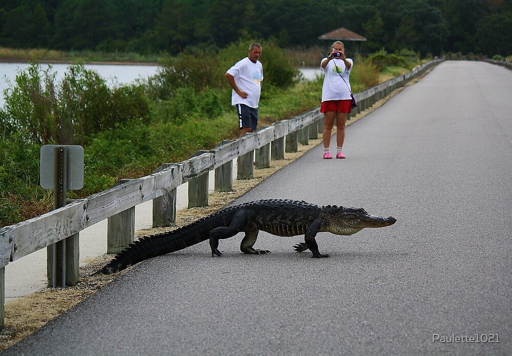 Alligator Crossing the Causeway by Paulette1021