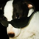 One Cool Dog by Doty