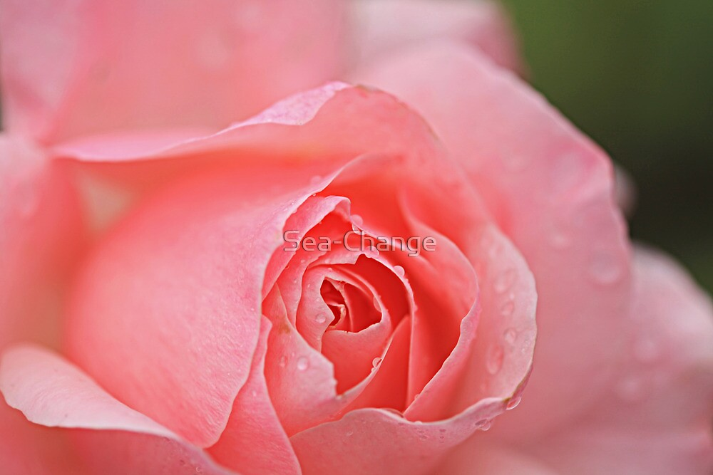 Raindrops on Roses #6 by Sea-Change