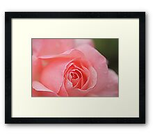 Raindrops on Roses #6 Framed Print