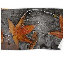 Autumn Freeze - Beaverton, Oregon Poster
