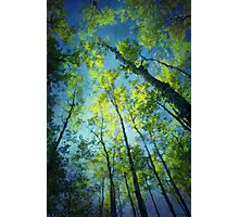 I love you as tall as the tallest tree.. Photographic Print