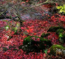 Autumn colours and acer by Paul Richards
