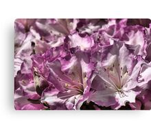 Fun with  Azaleas Canvas Print