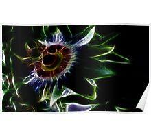 Passionflower fractilius. Poster